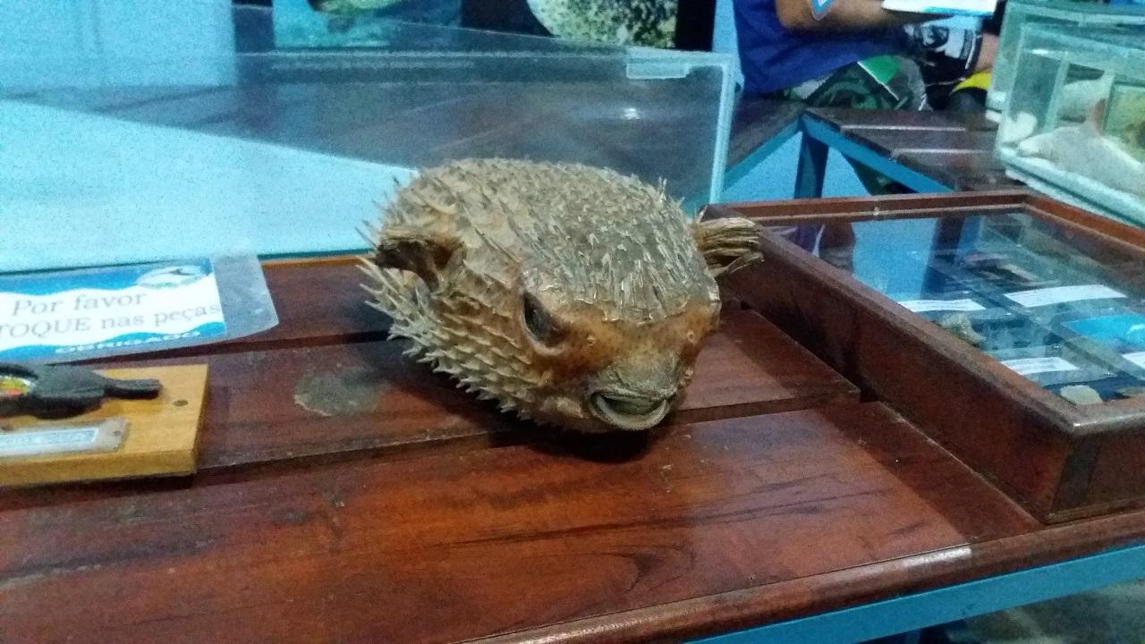 Aquário de Ubatuba - Museu