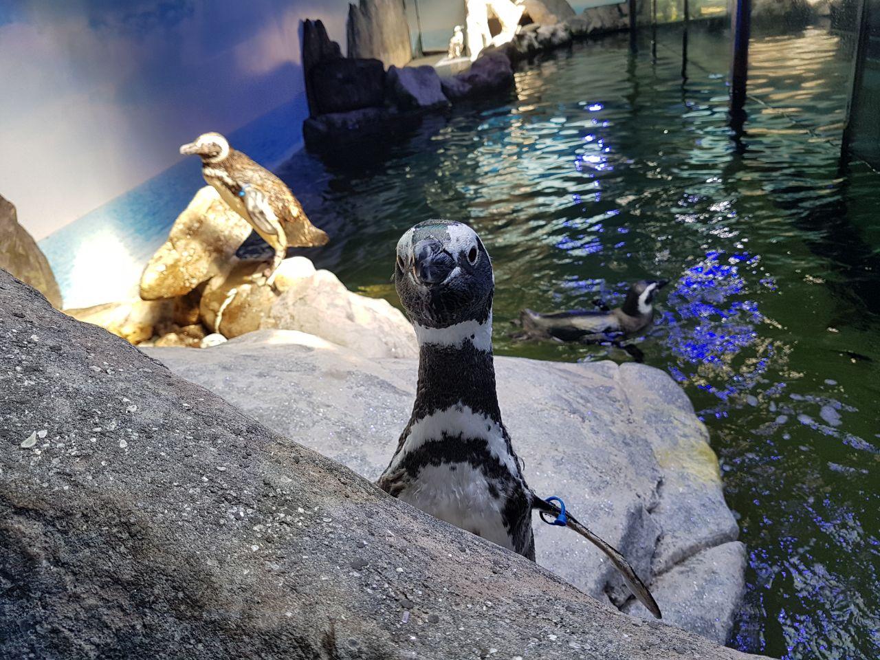 Pinguins - Aquário de Ubatuba