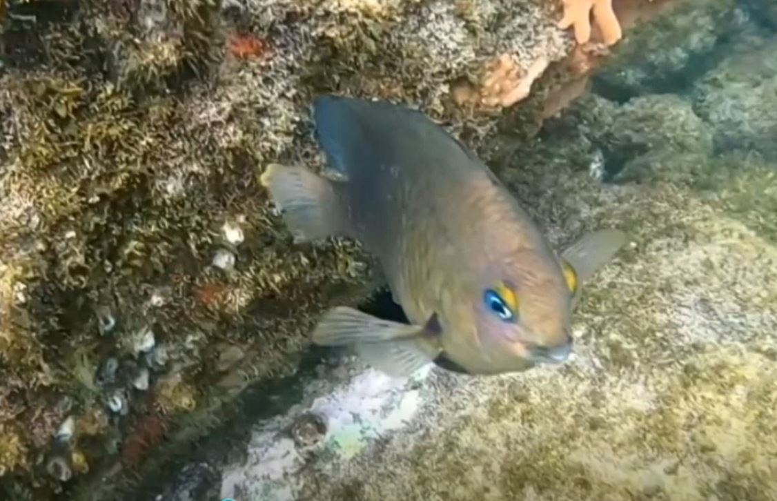 Mergulho no Fundo do Mar
